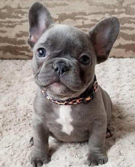 Student's Top 5 Favorite Dog Breeds